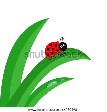 ladybird ladybug insect fresh