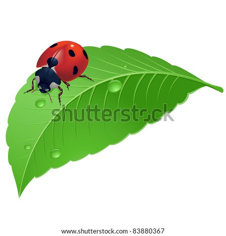Ladybird on grass with water drops. Illustration on white background. - stock vector