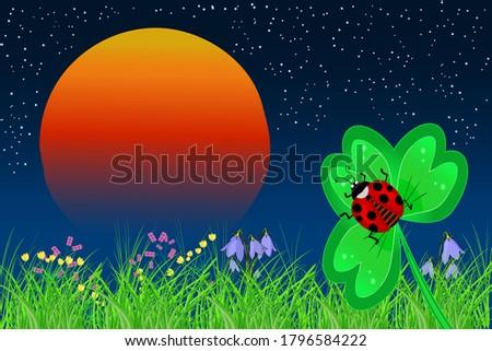 ladybird on the leaf on a