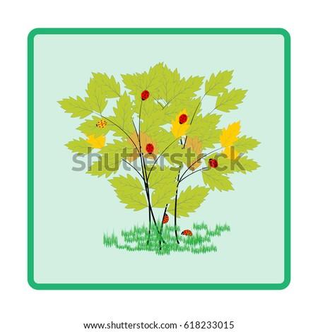 ladybird on twig card
