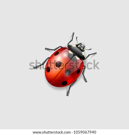 ladybird vector illustration