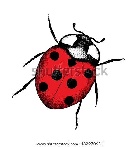 ladybug hand drawn illustration