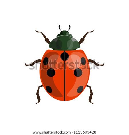 ladybug  ladybird  top view