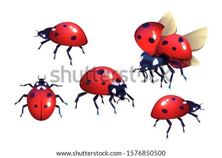 ladybug or ladybird  red with