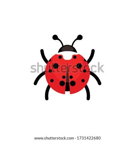 ladybug or ladybird vector