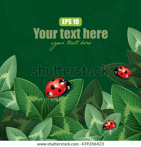 ladybug sitting on clover