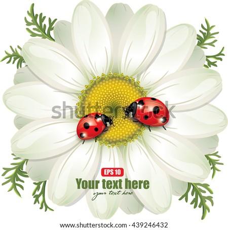 ladybug sitting on white daisy