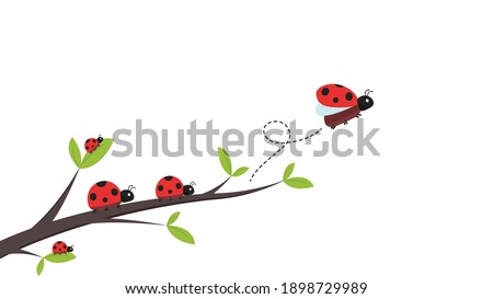 Ladybug vector. ladybug on white background. wallpaper. tree stick vector. Ladybug insects on the branches.  Сток-фото ©