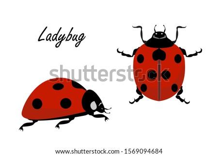 ladybug vector on a white