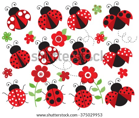 ladybugs in the garden  red