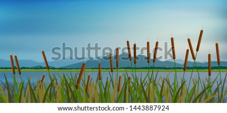 Lake scape and reed  Cattail grass vector Сток-фото ©