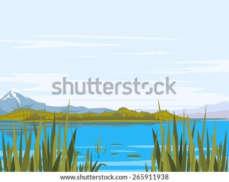 lake with bulrush plants  cane