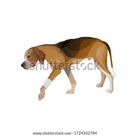 Lame dog walks with a bandaged paw. Vector illustration isolated on white background Photo stock ©