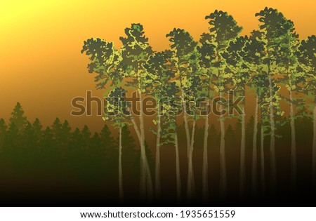 landscape morning in the pine