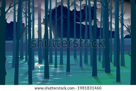 landscape of mangove forest on