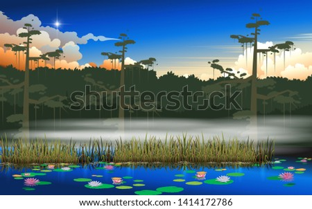 landscape of swamp in the