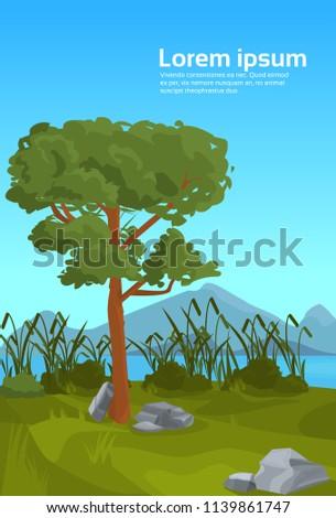 landscape pine mountain river