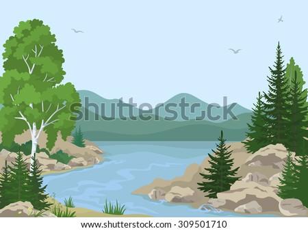 landscape with birch  fir trees