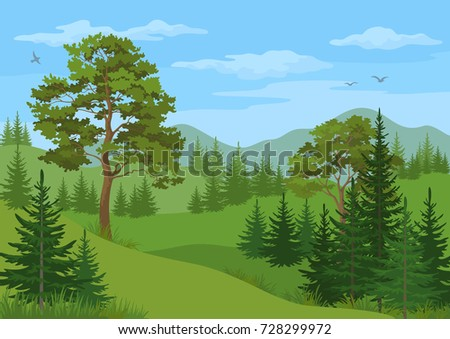 landscape with coniferous and