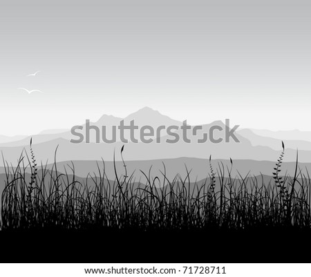 landscape with grass and