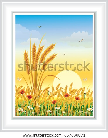 landscape with wheat on a