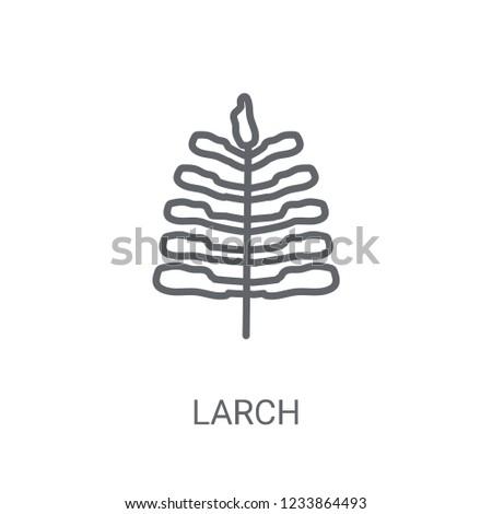 larch icon trendy larch logo