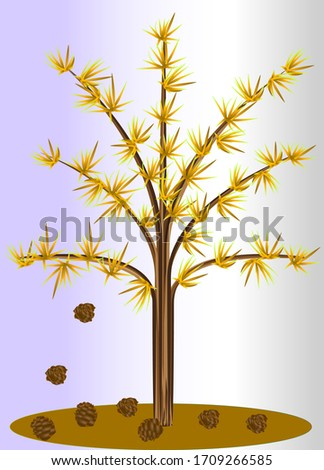 larch tree in autumn with
