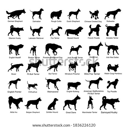 large dog breed set collection