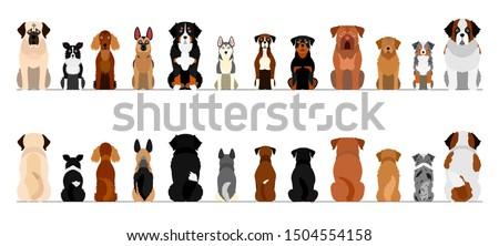 large dogs border border set