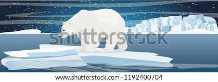 large polar bear on an ice floe