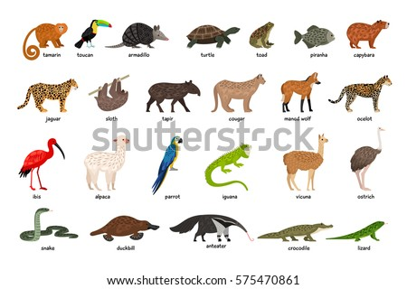 large set of animals of south