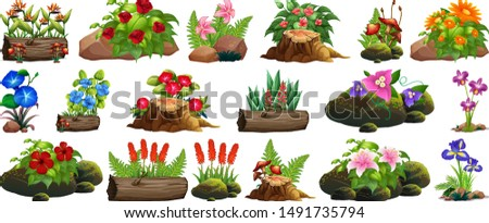 large set of colorful flowers