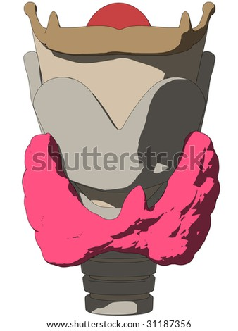 larynx anatomy
