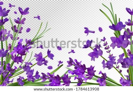 lavender background beautiful