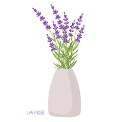 Lavender bouquet in vase. Lavender plant isolated. Vector flat grass lavender. Beautiful bouquet of wildflowers. Healing and cosmetics herb For label, packaging, card For congratulations, invitations.