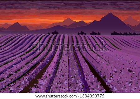 lavender field at the dusk