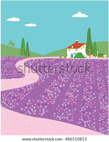 lavender fields landscape with