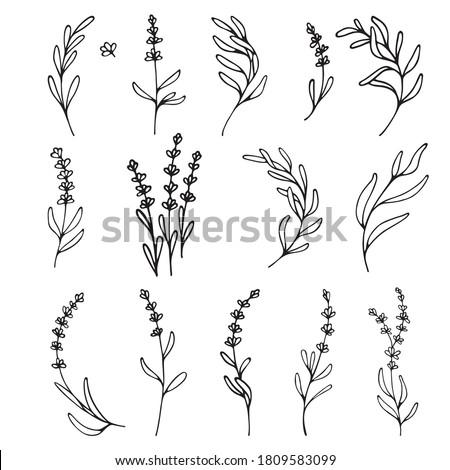 Lavender flowers clipart. Hand drawn design elements. Botanical vector elements for your design. Logo and branding. Outline. Foto stock ©