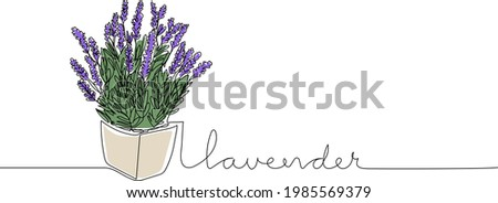 lavender flowers in continuous