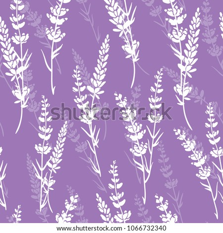 lavender flowers purple vector