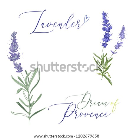 Lavender illustration wreath ith herbs and lettering. Watercolor outline vintage sketch on white background. Vector botanical paking or card design. Foto stock ©