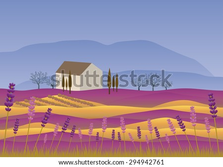 lavender landscape at summer