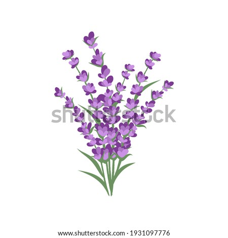 Lavender plant flowers bunch icon, isolated on white background. Vector illustration Stock photo ©