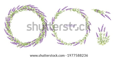 lavender plant set lavender
