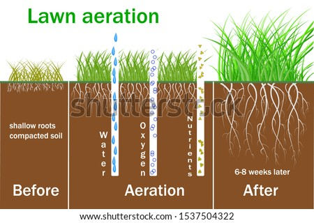 Lawn aeration for active plant growth. Free access of water and air to soil. Process steps before and after. Vector Lawn grass care service, gardening of lawns and landscape design services.