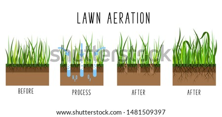 Lawn aeration process steps - before and after, lawn grass care service, gardening and landscape design, isolated illustration for article, infographics or instruction on white background, vector
