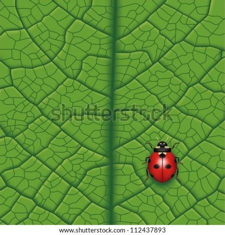 Layered Vector Illustration Of Ladybug On Leaf.
