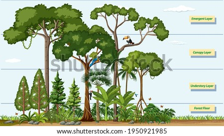 Layers of a Rainforest with name illustration