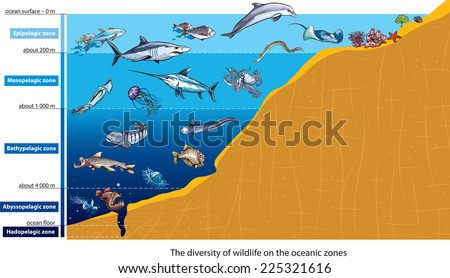 Stock Photo Layers of the ocean (deep sea creatures).