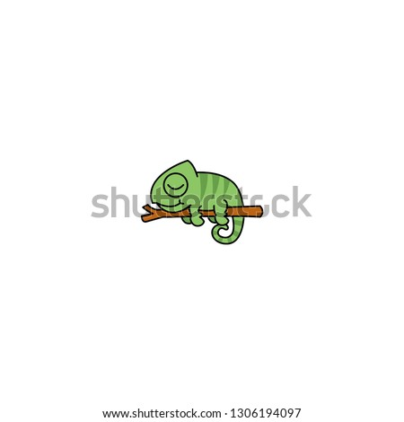 lazy chameleon sleeping on a